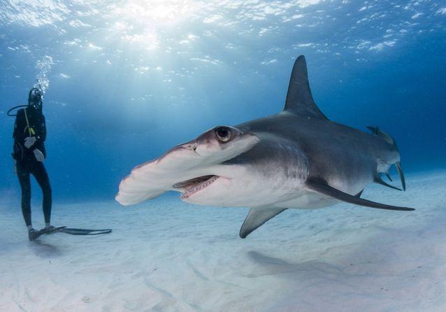 La meilleure plongée sous-marine en Polynésie française